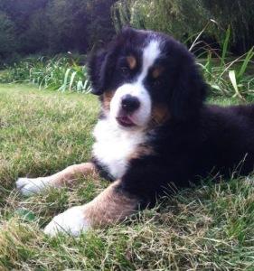 18 chú cún đáng yêu này sẽ làm đời bạn tươi sáng hơn