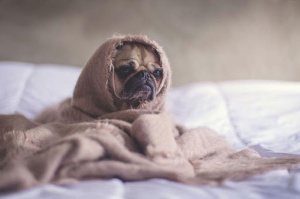 """Dáng ngủ của các """"Boss"""" trong mùa đông giá lạnh"""