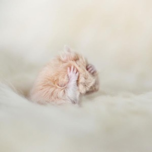 20 em hamster xinh phá đảo thế giới ảo