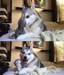 Husky - thiên tài diễn xuất không có đối thủ